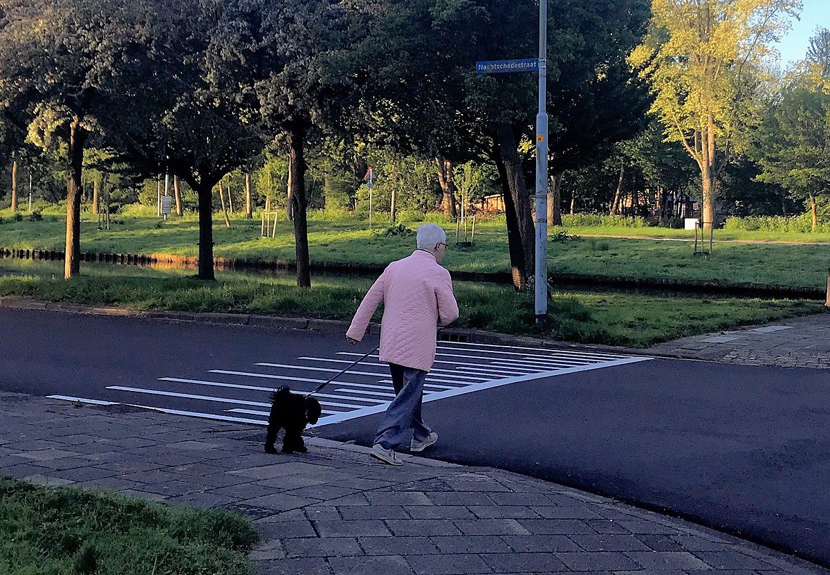 Picture Of Woman Walking Dogs