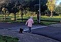 Dog walking woman.jpg