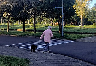 Dog walking act of a person walking with a dog