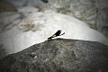 Dragonfly resting on a stone at the Tarocco Gorge.jpg