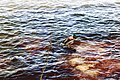 Ducks (34120432153).jpg