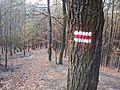 Dziewicza Gora trail.jpg