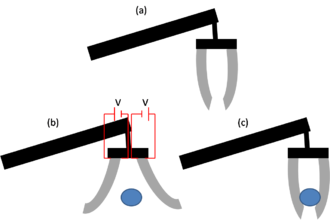 Electroactive polymers - (a) Cartoon drawing of an EAP gripping device. (b) A voltage is applied and the EAP fingers deform in order to surround the ball. (c) When the voltage is removed, the EAP fingers return to their original shape and grip the ball.