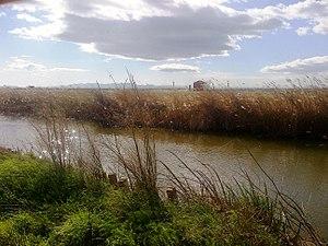 ES0000023 Albufera de Valencia-canal en Catarroja.jpg