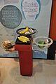 Eating Water - Beyond Maya Gallery - Swami Akhandananda Science Centre - Ramakrishna Mission Ashrama - Sargachi - Murshidabad 2014-11-29 0274.JPG