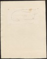 Echidna histrix - 1700-1880 - Print - Iconographia Zoologica - Special Collections University of Amsterdam - UBA01 IZ20300198.tif