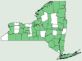 Echinocystis lobata NY-dist-map.png