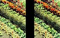 Eden Tropical Biome plants on a slope 3D SL46 19R18L small.jpg