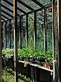 Edible Schoolyard Berkeley 03.jpg