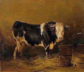 Stier im Stall
