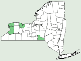 Erigenia bulbosa NY-dist-map.png