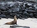 Espanola - Hood - Galapagos Islands - Ecuador (4871488088).jpg