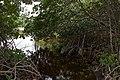 Everglades 01.jpg