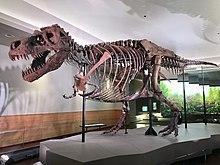FMNH Tyrannosaurus rex Sue.jpg