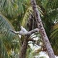 Fakarava - Gygis blanche plage PK 9.jpg
