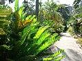 Fale - Giardini Botanici Hanbury in Ventimiglia - 654.jpg