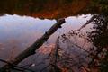 Fall-log-lake - West Virginia - ForestWander.png