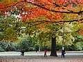 Fall Colors - Prospect Park - Brooklyn - New York - USA (10389379956).jpg