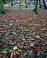 Fallen leaves, Castle Park - geograph.org.uk - 1579570.jpg