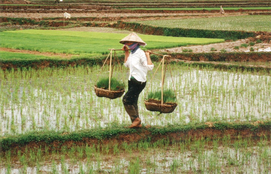 Farmer in Vietnam