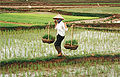 Farmer in Vietnam.jpg