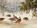 Ferdinand von Wright - Partridges in Snow - A-2002-620 - Finnish National Gallery.jpg