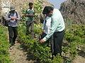 Field visit chilli crop.JPG