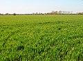 Fields near New House Farm - geograph.org.uk - 393917.jpg
