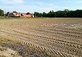 Fields with asparagus in Poznan Marcelin (1).jpg