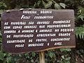 Figueira (placa) - panoramio.jpg