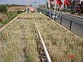 Filtre planté (constructed wetland) au ville de Attaouia, Maroc (Morocco) (11055540526).jpg