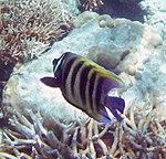 Fish 16 (30880410712).jpg