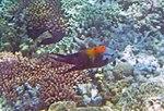 Fish 5 (30997133845).jpg