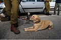 Flickr - Israel Defense Forces - Canine Search and Rescue Team Prepares to Depart.jpg