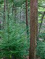 Flickr - Nicholas T - Fishing Creek Nature Preserve (2).jpg