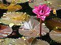 Flor acuática.jpg