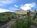 Flora del volcán.jpg