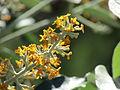 Flores en el Jardín Botánico de Viña del Mar 19.JPG