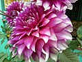 Flower.4.jpg