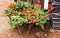Flower Display in Old Wheelbarrow.jpg