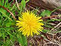 Flower Rex 4.jpg