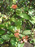 Flower dsc07296.jpg
