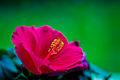 Flower power (6185938109).jpg