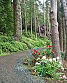 Flowers by the footpath, Cragside - geograph.org.uk - 1387566.jpg