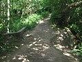 Footbridge in Snipe Wood (1) - geograph.org.uk - 1409111.jpg