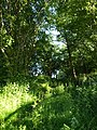 Footpath by Foxbury Wood - geograph.org.uk - 1340616.jpg