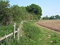 Footpath by the edge of Hopton Fen - geograph.org.uk - 800667.jpg