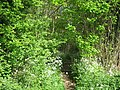 Footpath enter Mereworth Woods - geograph.org.uk - 1292837.jpg