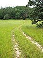 Footpath through a meadow - geograph.org.uk - 549346.jpg