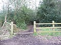 Footpath through the woods - geograph.org.uk - 1220474.jpg